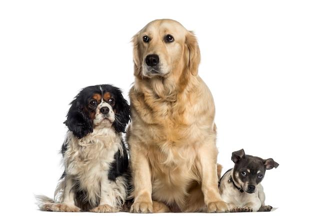 Gruppo di cani seduti insieme