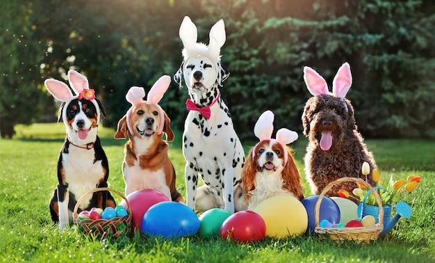 Un gruppo di cani con fasce orecchie da coniglio alla festa di pasqua