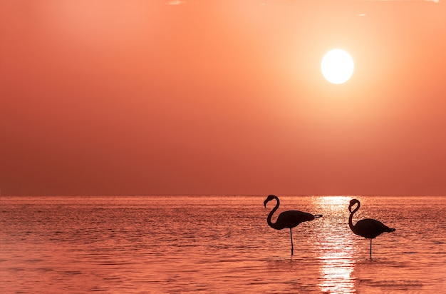 Un gruppo di fenicotteri sta in una laguna contro il tramonto dorato e il grande sole luminoso