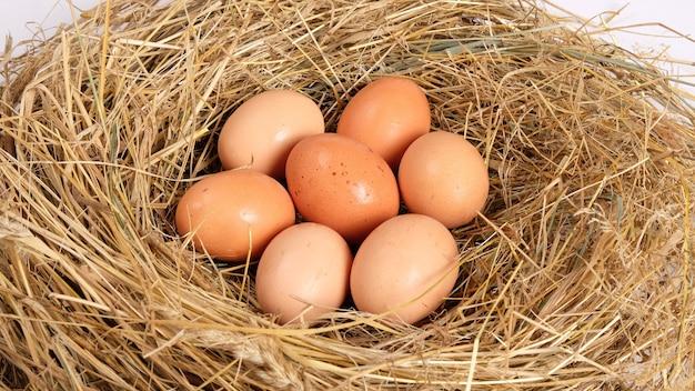 Gruppo di uova di gallina marrone fresche nel nido di pollo da fieno