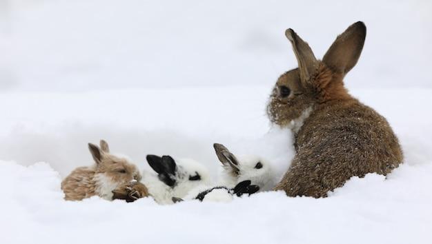 Gruppo di lepri nella neve