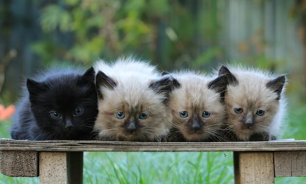 Un gruppo di gattini su un prato verde
