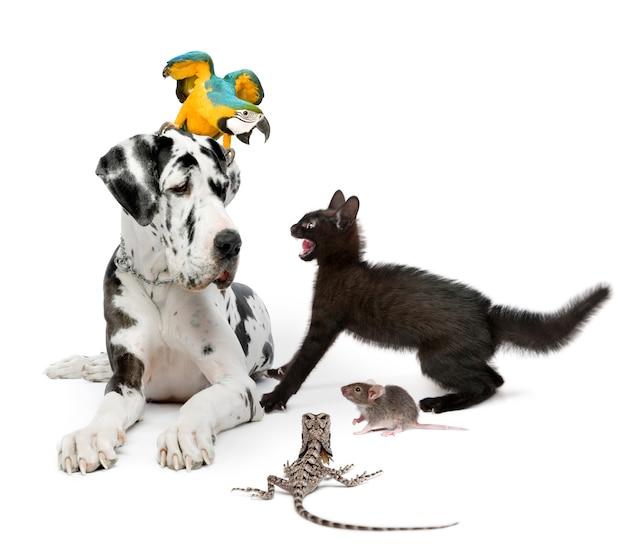 Gruppo di animali domestici davanti a sfondo bianco
