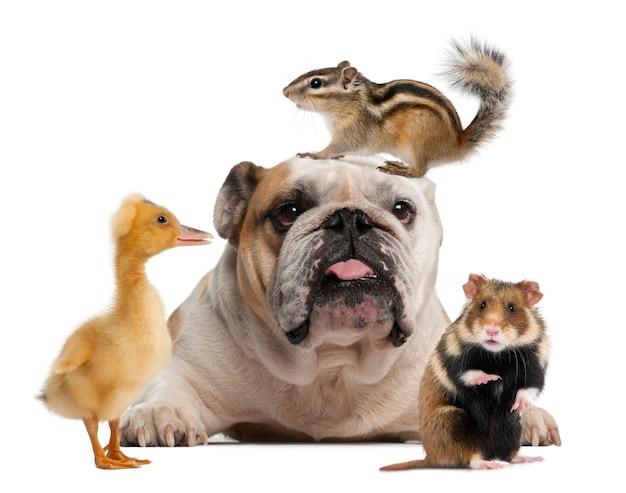 Gruppo di animali domestici davanti a una superficie bianca