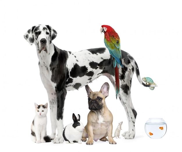 Gruppo di animali domestici che stanno, colpo dello studio