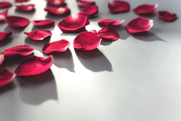 Gruppo di petali di rosa rossa su superficie grigia