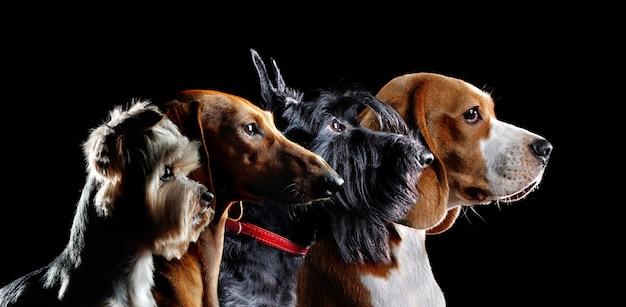 Silhouette di gruppo di cani di diverse api
