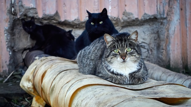 Un gruppo di gatti randagi si sta scaldando sulla rete del riscaldamento in strada