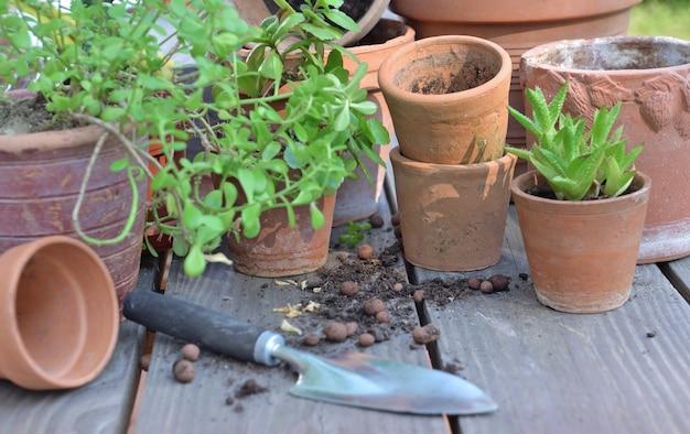 Gruppo di vasi da fiori in terracotta e piante succulente su un tavolo da giardino
