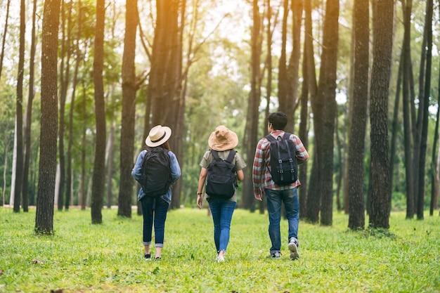 Un gruppo di viaggiatori che cammina e guarda in una bellissima pineta