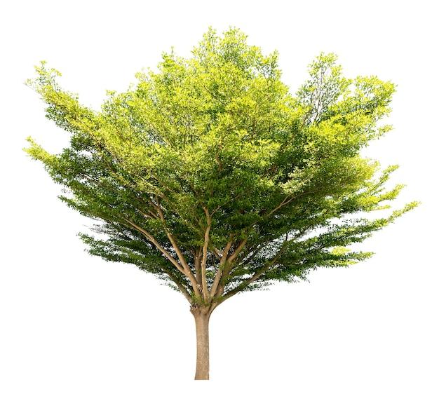Gruppo di albero isolato su sfondo bianco per materiale di design