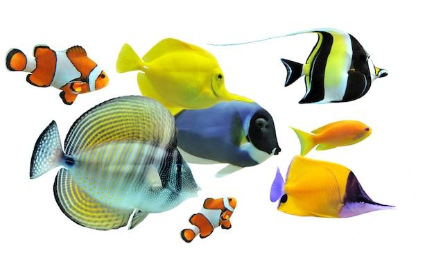 Gruppo di pesci tropicali