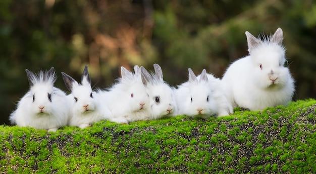 Un gruppo di conigli bianchi sul prato