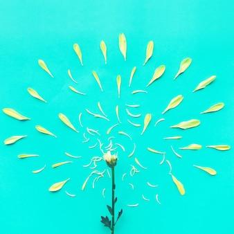 Il gruppo di petali gialli fiorisce sull'azzurro
