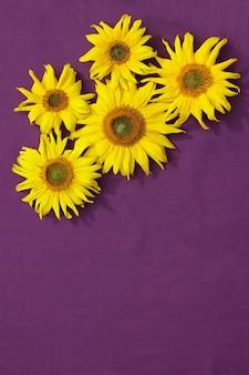 Un gruppo di girasoli gialli su una superficie viola
