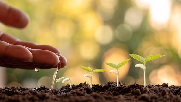 Coltivazione di raccolti su terreno fertile e irrigazione delle piante, inclusa la visualizzazione delle fasi di crescita delle piante, concetti di coltivazione e investimenti per gli agricoltori.