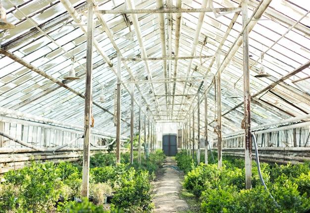 Coltivazione di piante diverse nella vecchia serra.