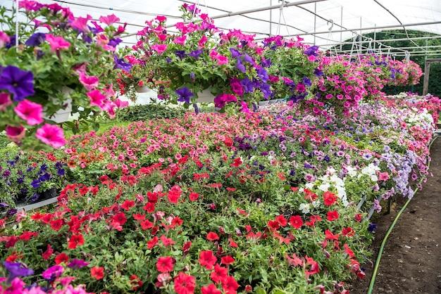 Fiori in crescita che crescono all'interno di un vivaio in serra. prenditi cura delle piante