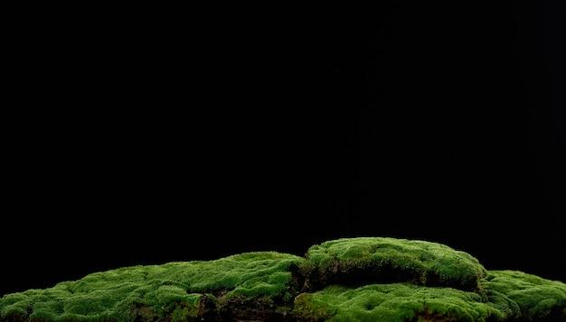 Muschio verde in crescita su sfondo nero. fondale per l'esposizione di prodotti, cosmetici naturali, bevande