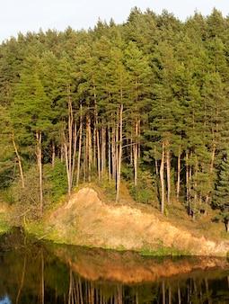 Crescendo su una collina vicino al fiume alti pini, gli alberi si riflettono sulla superficie dell'acqua, il paesaggio con un cielo blu