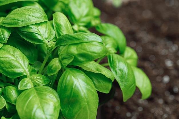 Foglie crescenti di foto macro micro pianta verde