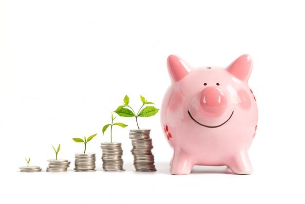 Soldi crescenti - pianta sulle monete con il porcellino salvadanaio rosa isolato su bianco