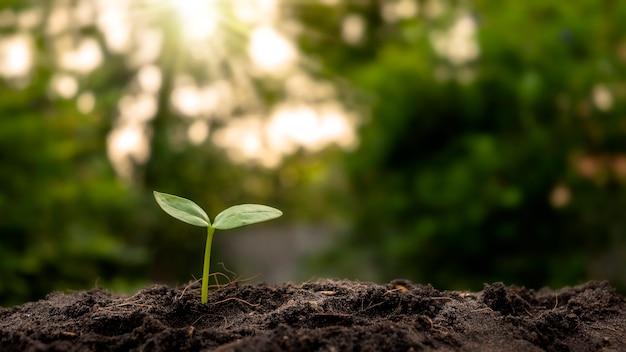 Pianta in crescita su terreno con sfondo di vegetazione sfocata