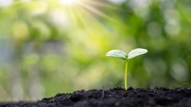 Pianta in crescita sul suolo con luce solare e sfondo di vegetazione sfocata