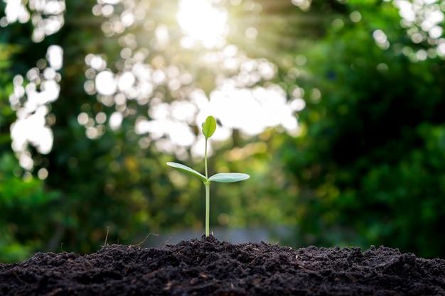 Pianta in crescita su terreno con luce solare con sfondo di vegetazione sfocata