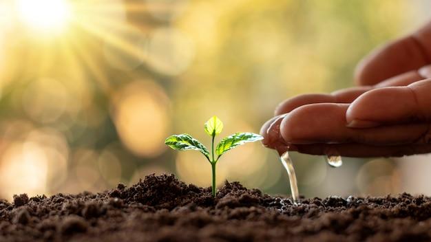 Piante in crescita in terreno fertile e irrigazione. piantare idee e investimenti per gli agricoltori.
