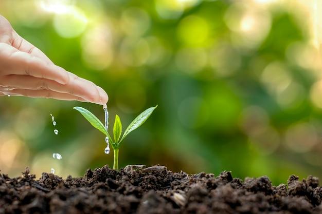 Piante in crescita in terreno fertile e irrigazione