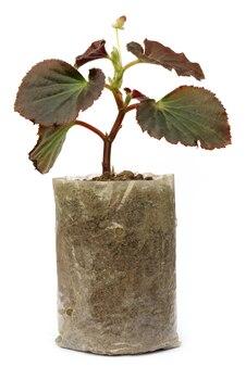 Piantina in crescita in un sacchetto di polietilene su sfondo bianco