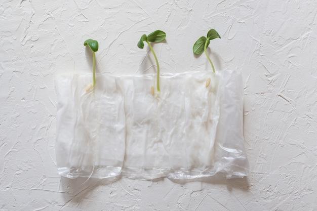 Piantine in crescita senza terra in carta