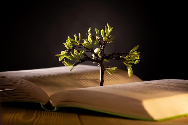 Albero in crescita con foglie verdi da un libro aperto