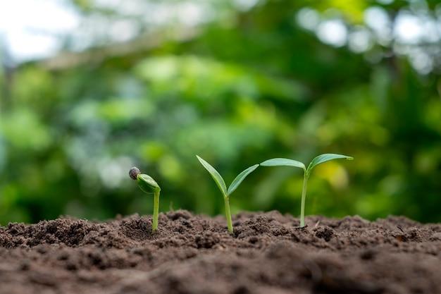 La crescita e lo sviluppo di piante o alberi che crescono dal suolo sulla natura verde