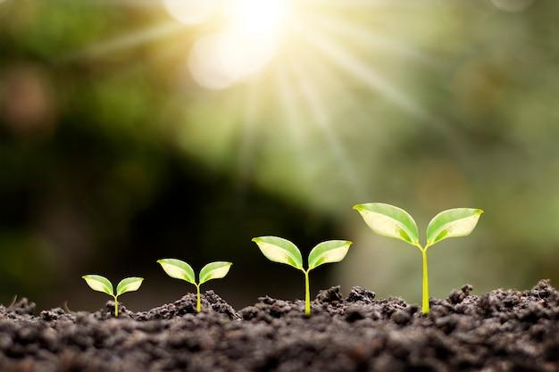 Ordine di crescita di giovani piante, piante o giovani alberi su sfondo naturale.