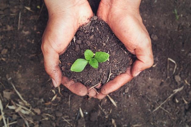 La crescita delle piante sul terreno in entrambe le mani