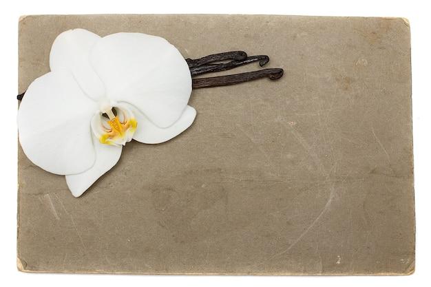Carta grunge con orchidea bianca e baccelli di vaniglia