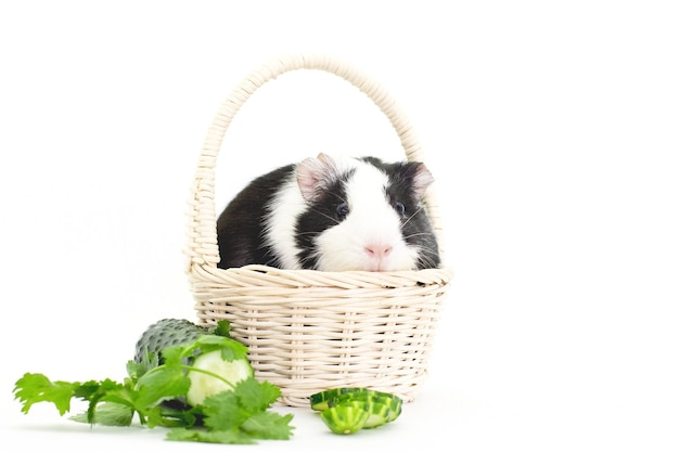 Cavia con verdura fresca su fondo bianco