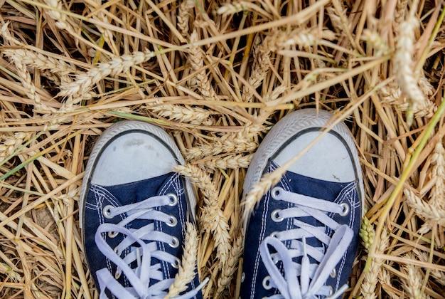 Gumshoes e spighette dorate naturali di grano a luglio