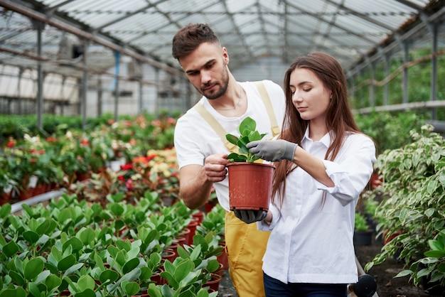 Ragazzo che controlla le foglie. coppia di fioristi al lavoro. ragazza con vaso con pianta verde.