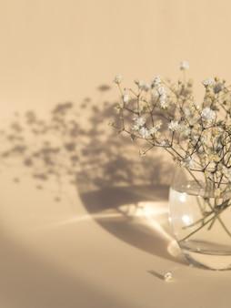 Gypsophila fiori in vaso di vetro su sfondo beige luce e ombra