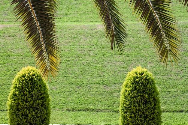 Haifa israel 11 06 16: i giardini bahai si possono trovare nei luoghi santi bahai in israele e altrove. molti luoghi sacri bahai ad haifa e nei dintorni di acre israel sono stati iscritti nella lista del patrimonio mondiale nel 2008