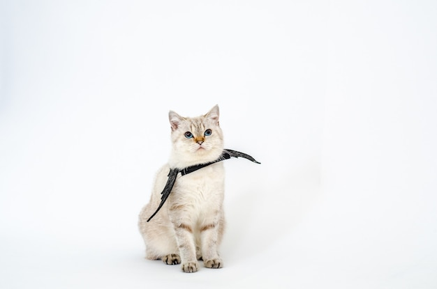 Halloween catportrait gattino indossare ala di pipistrello nero isolato su sfondo bianco