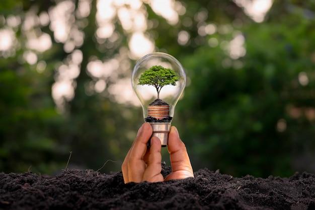 Mano che esce dal terreno tenendo una lampadina con un piccolo albero all'interno su sfondo di vegetazione sfocata