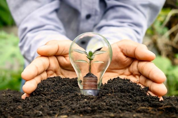 Ritaglio manuale in terreno ricco e alberi che crescono denaro in lampadine a risparmio energetico, un'idea iniziale di finanziamento e investimento energetico