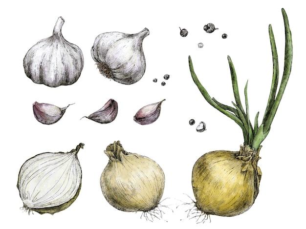 Mano disegno cipolla, aglio, pepe
