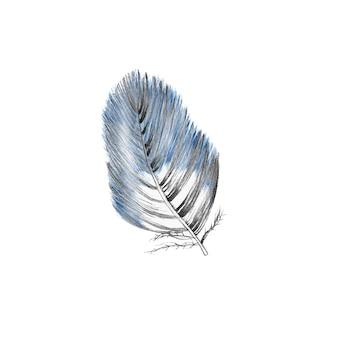 Pennacchio blu disegnato a mano