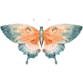 Farfalla dell'acquerello disegnato a mano