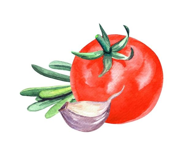 Pomodoro, aglio e rosmarino dell'acquerello disegnato a mano pittura su priorità bassa bianca.